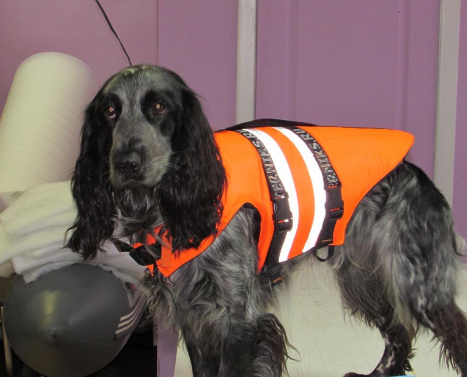 Спасжилет для собаки 2